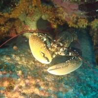diving_lopar35