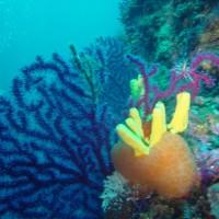 diving_lopar29