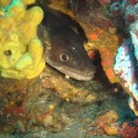 diving_lopar27