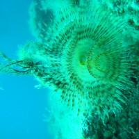 diving_lopar24
