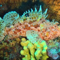 diving_lopar22