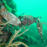 diving_lopar18