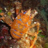diving_lopar17