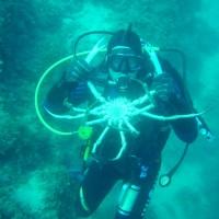 diving_lopar11