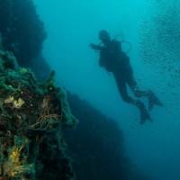diving_lopar30