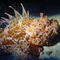 diving_lopar15