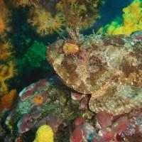 diving_lopar9