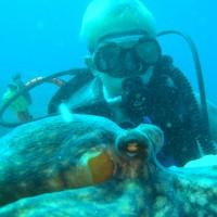 diving_lopar6