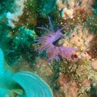 diving_lopar5