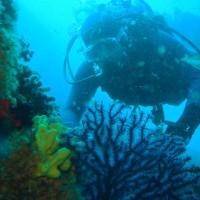 diving_lopar4