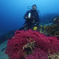 diving_lopar3
